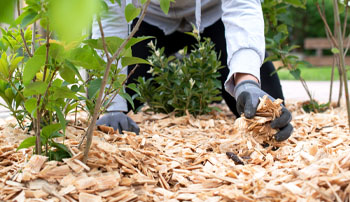 mulching and yard cleanup